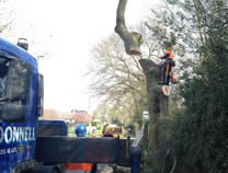 Dismantle road side tree in Guisborough with hiab & traffic management.